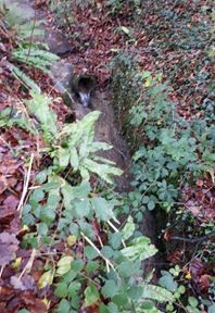 gully on a hillside amongst plants and leaves