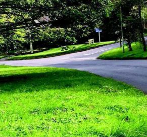 grass verge on sunny day along road at sticklepath