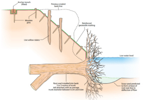 Bank protection using root wads to protect the toe of the bank from erosion