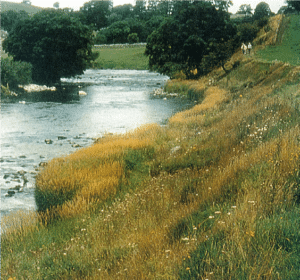 Grass revetment with wildflower mix