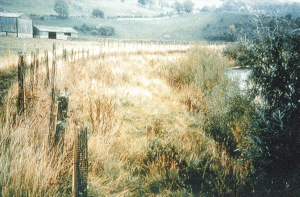 Bank is stabilised by the growth of vegetation, fencing is used to restrict access and the vegetation growth is enhanced by tree planting at the top of the bank and willows at the toe.