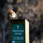 Robin on post by Nicky Cook
