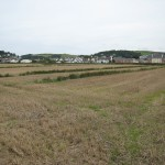 A colour ground photograph of an open area of cultivated land separated by narrow, low, grassed baulks.