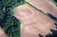 Although levelled by ploughing, this late prehistoric or Romano-British farmstead enclosure west of Exeter is clearly visible as a soil mark. The distinctive 'zig-zag' pattern indicates active erosion of the defensive bank by cultivation.