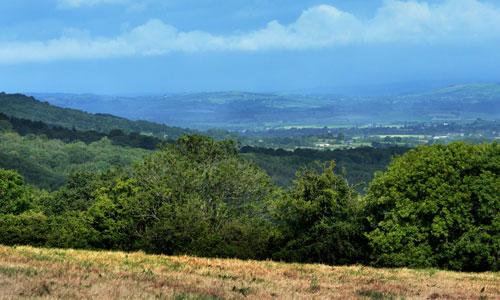 blackdown hills scarp landscape image