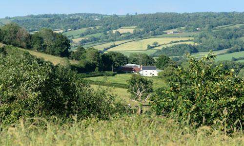 blackdown hills landscape picture