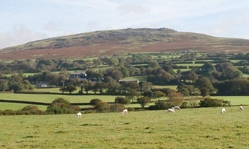 Tavistock Dartmoor landscape