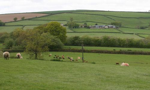 south molton farmland landscape photo