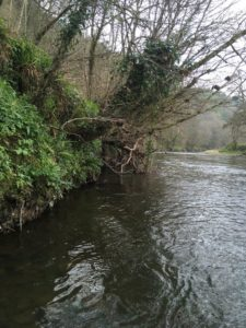 The River Taw