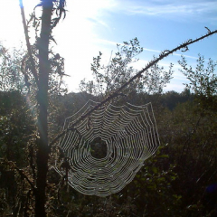 """Spider web • <a style=""""font-size:0.8em;"""" href=""""http://www.flickr.com/photos/27734467@N04/26261386896/"""" target=""""_blank"""">View on Flickr</a>"""