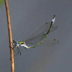 """Emerald - photo by Viv Chapman • <a style=""""font-size:0.8em;"""" href=""""http://www.flickr.com/photos/27734467@N04/25669462323/"""" target=""""_blank"""">View on Flickr</a>"""