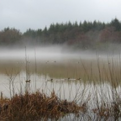 """Flooded Winter Morning • <a style=""""font-size:0.8em;"""" href=""""http://www.flickr.com/photos/27734467@N04/26189062333/"""" target=""""_blank"""">View on Flickr</a>"""