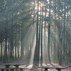 "Sunrise through the plantation • <a style=""font-size:0.8em;"" href=""http://www.flickr.com/photos/27734467@N04/26187568644/"" target=""_blank"">View on Flickr</a>"