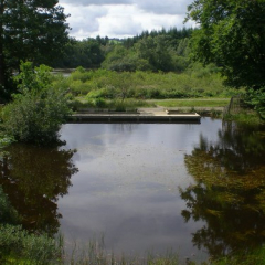 "Puddle Pond • <a style=""font-size:0.8em;"" href=""http://www.flickr.com/photos/27734467@N04/26189062213/"" target=""_blank"">View on Flickr</a>"