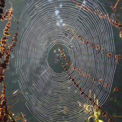 "Morning Dew Spiders Web • <a style=""font-size:0.8em;"" href=""http://www.flickr.com/photos/27734467@N04/26187569024/"" target=""_blank"">View on Flickr</a>"