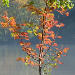 "Rowan Colours • <a style=""font-size:0.8em;"" href=""http://www.flickr.com/photos/27734467@N04/26725775661/"" target=""_blank"">View on Flickr</a>"