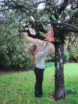 bird box in a tree