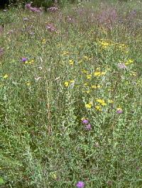 grassland[1]