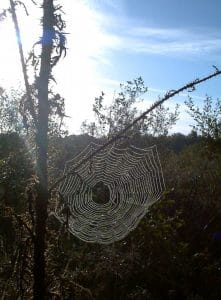 Spider's web in the morning sunshine