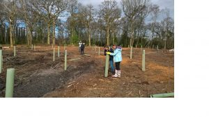 Tree planting by Devon County Council apprentices