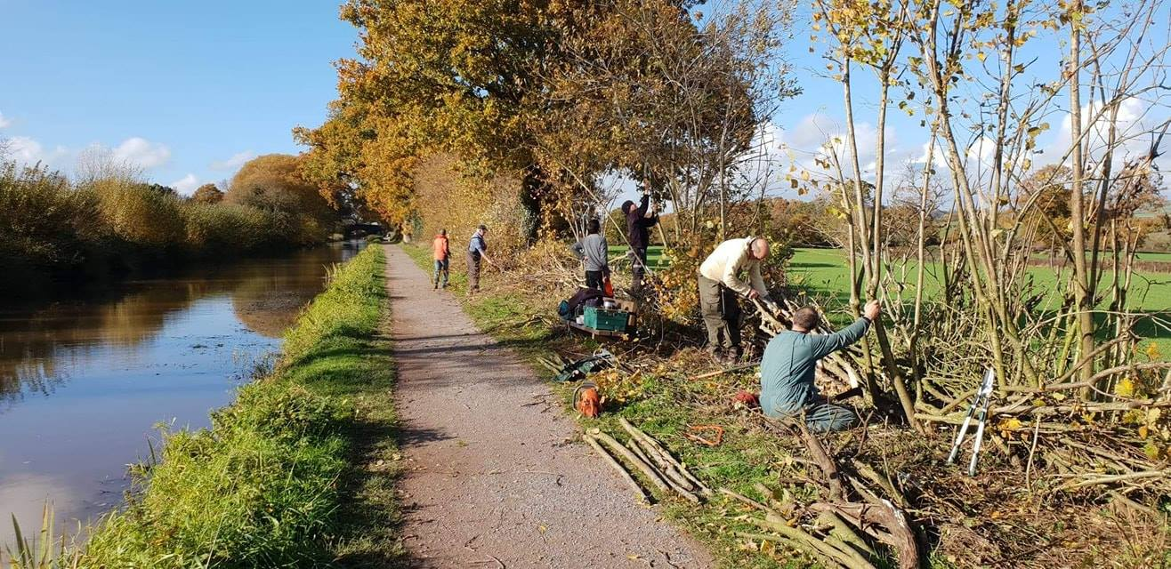 Volunteers laying hedges on the Manley straight
