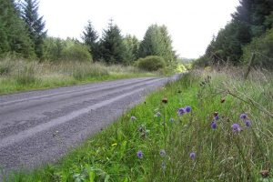 Road and wildflower verge