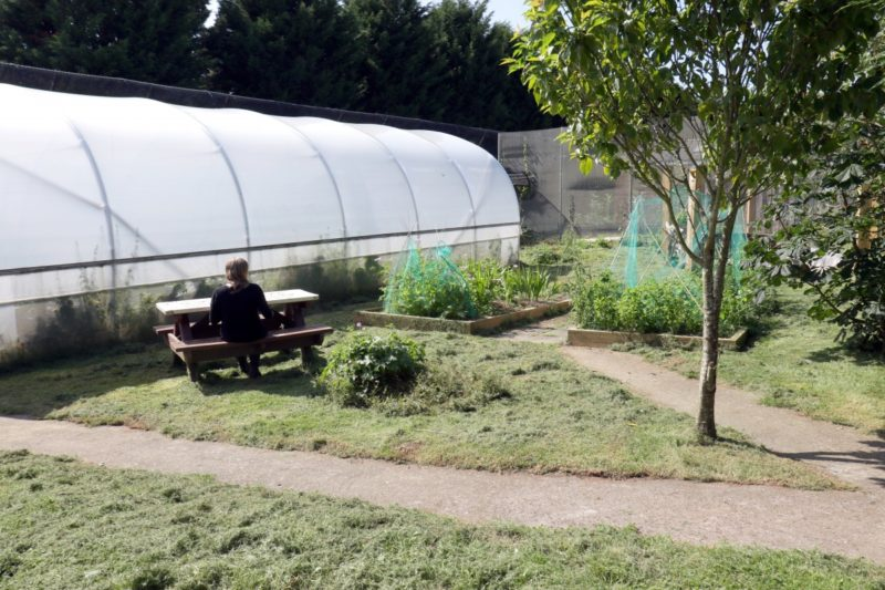 polly tunnel in outside area with grass and a bench and a tree