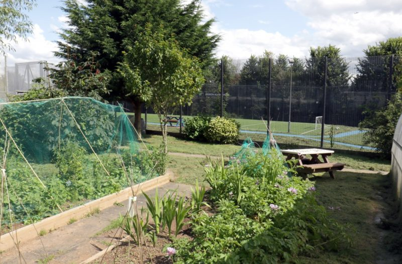 garden with shrubs plants and vegetables