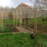 garden with chickens