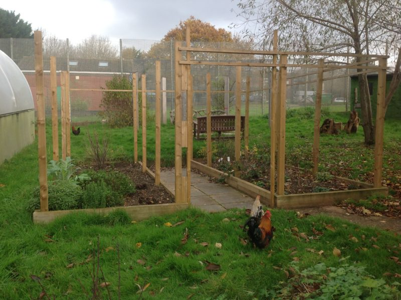 garden with chickens