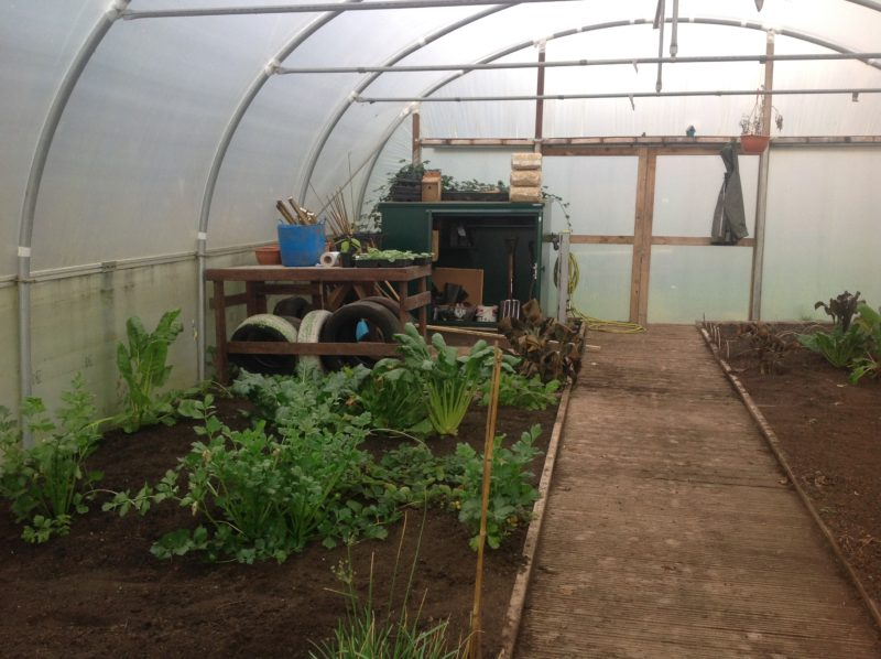 polytunnel with plants growing