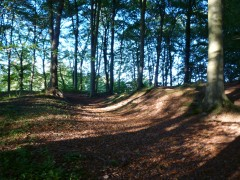 Dolbury Hillfort ramparts, Killerton (© S.Reed)