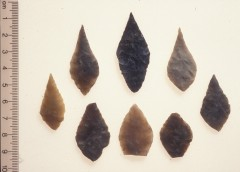 Neolithic flint arrowheads discovered at Haldon. These are about 5000 years old. Stone tools like these can often be the first indication of the presence of an archaeological site. © Royal Albert Memorial Museum & Art Gallery, Exeter