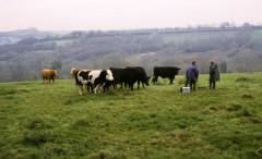 Talking to farmers