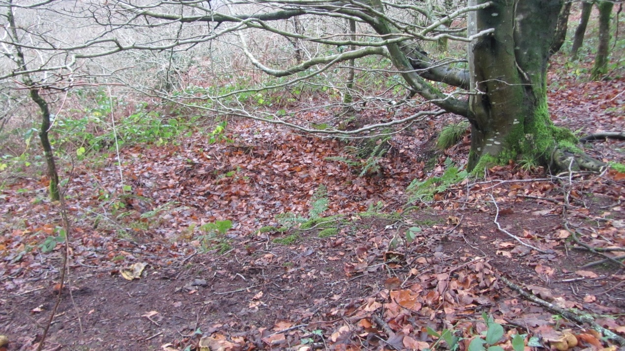 A colour ground photograph of one of the circular earthwork pits just downslope of a tree on a hillslope.