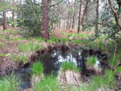 A colour ground photograph of a water-filled hollow in woodland.