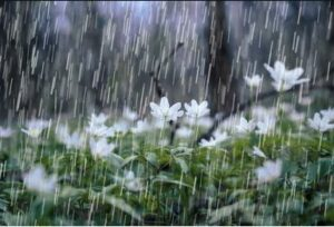 Rain folling on a bed of spring flowers.