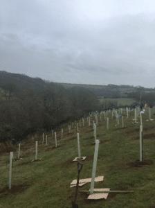 Cross slope tree planting in a field