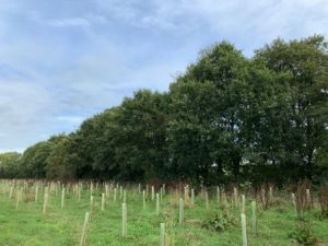 Riparian woodland planting in a field