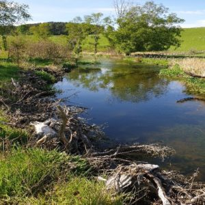 A river that has had floodplain reconnection works