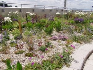 SuDS Feature, Green Roof