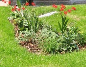 SuDS Feature, Rain Garden