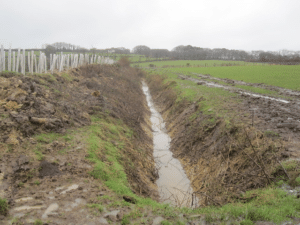 A photo of a swale
