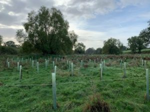 Tree planting for woodland creation