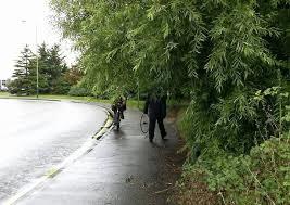 An overgrown tree blocking a footpath
