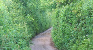 overgrown hedges on narrow country lane