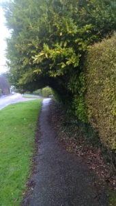 Footway in Sidmouth cleared of leaves
