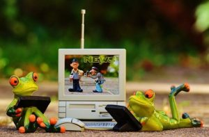 Frogs using laptop computer