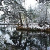Bystock Ponds near Exmouth Snow scene by Jenny Bowden